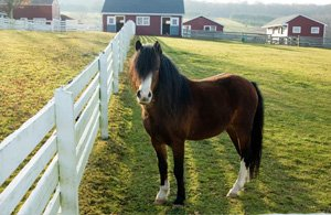 Horse Farms for Sale in Eastern PA